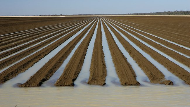 Cubbie Station in far southwestern Queensland. Irrigation channels in a freshly planted crop.