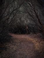 "Kevin Rheese from Carwoola (NSW) There are witches and fairies, pixies and sprites ""A story of intrigue draws me to this image, I want to follow the path. Warm colours are inviting, so leaf-litter brings the eye in. Symmetrical, overhanging woods keep the eye down. A lighter-toned tree near centre helps the eye travel along the path."" Picture: 2015 Canon Light Awards"