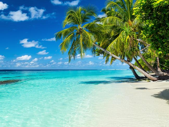 Palm trees overhanging a Caribbean beach. Picture: iStock