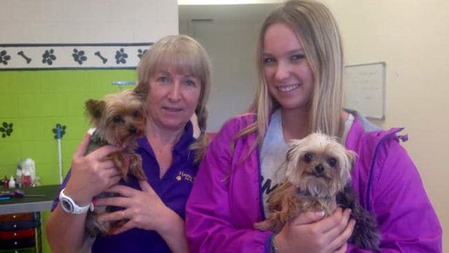 Happy Dog salon's Lianne and Ellie Kent with pistol (left) and boo who belong to Johnny Depp and his wife Amber Heard, the dogs came in for some grooming Picture supplied by Lianne Kent