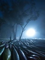 """Colin Bartley from Halls Head (WA) Paddlers on a cold misty morning """"What a strong and original image this is. It is full of atmosphere and graphics. The single strong back light cutting through the mist is just perfect . The shapes of the canoes look like stranded whales and make the scene somewhat surreal. Picture: 2015 Canon Light Awards"""