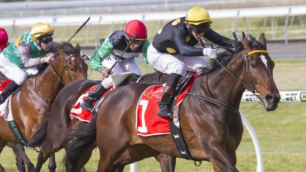 Balf's Choice (Matthew Neilson) surges clear to win at Morphettville. Picture: Atkins Photography