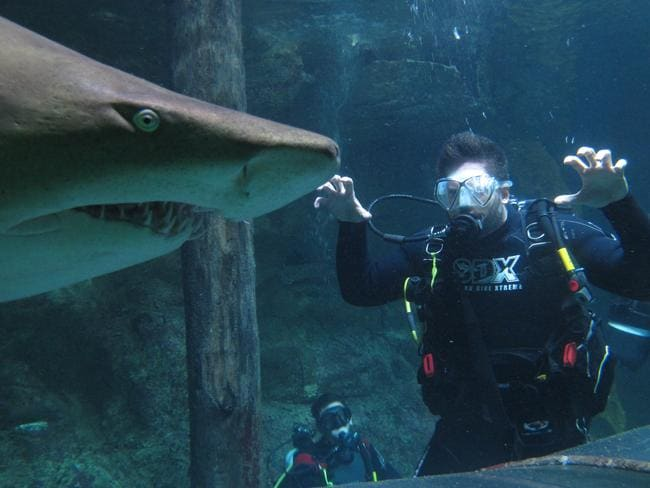 Joe Manganiello dives with sharks at Manly Sea Life Sanctuary. Picture: Manly Sea Life Sanctuary/Getty