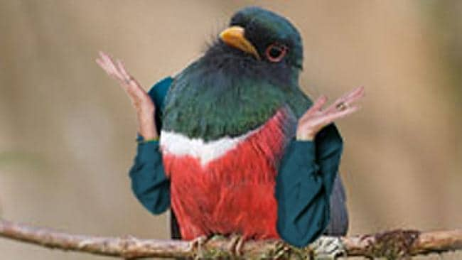 The internet has a place for people to photoshop arms on birds. Handy. Source: Tumblr