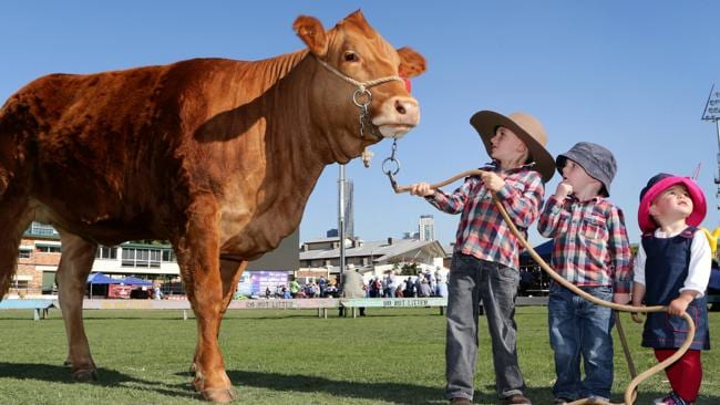 Thousands expected for day one of brisbane 39 s ekka at rna for Pool show rna showgrounds