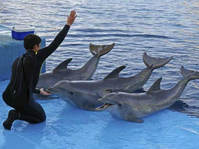 Dolphin tricks. Picture: World Animal Protection