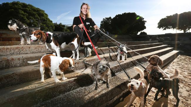 Dog walking is another option. Small business owner Xavier Diekman from Mad Dogs has done just that. Picture: Richard Dobson