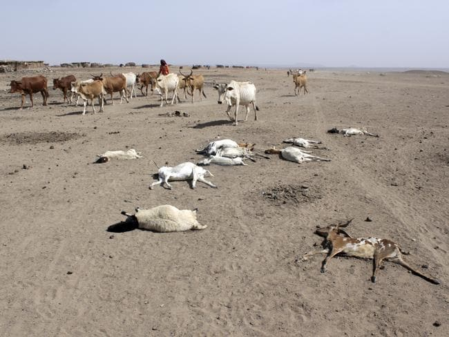Starving to death ... Dried waterbeds and arid conditions dominate the Ethiopian landscape.