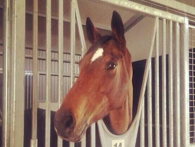 Verema at home in her stables. Picture: Twitter