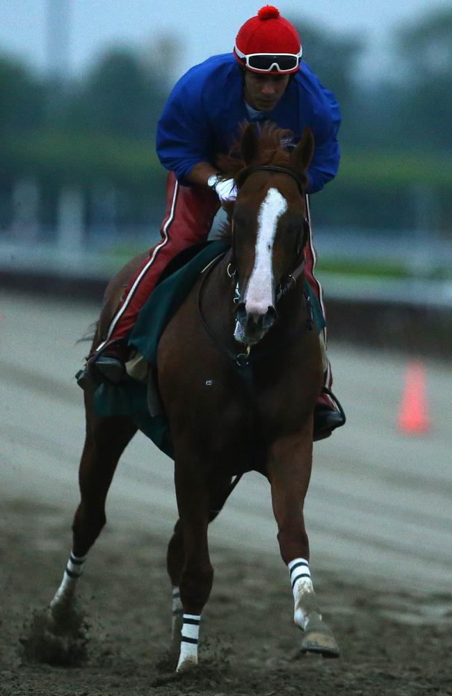 California Chrome, with exercise rider Willie Delgado at Belmont Park trackwork this week.