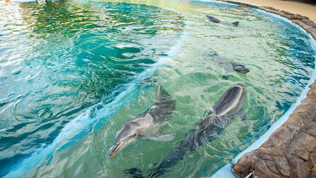 The dolphin enclosure at Dolphin Marine Magic in Coffs Harbour. Pic: Lindsay Moller