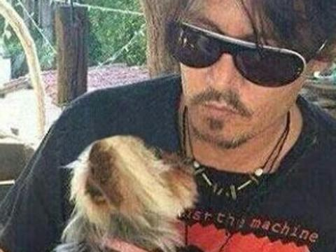 Johnny Depp dog Picture: Pinterest