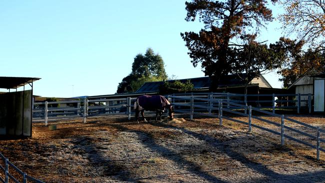 A horse at the property where the girl died. PICTURE: John Grainger
