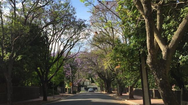 Adelaide jacaranda season starts late thanks to cooler for Topsoil adelaide