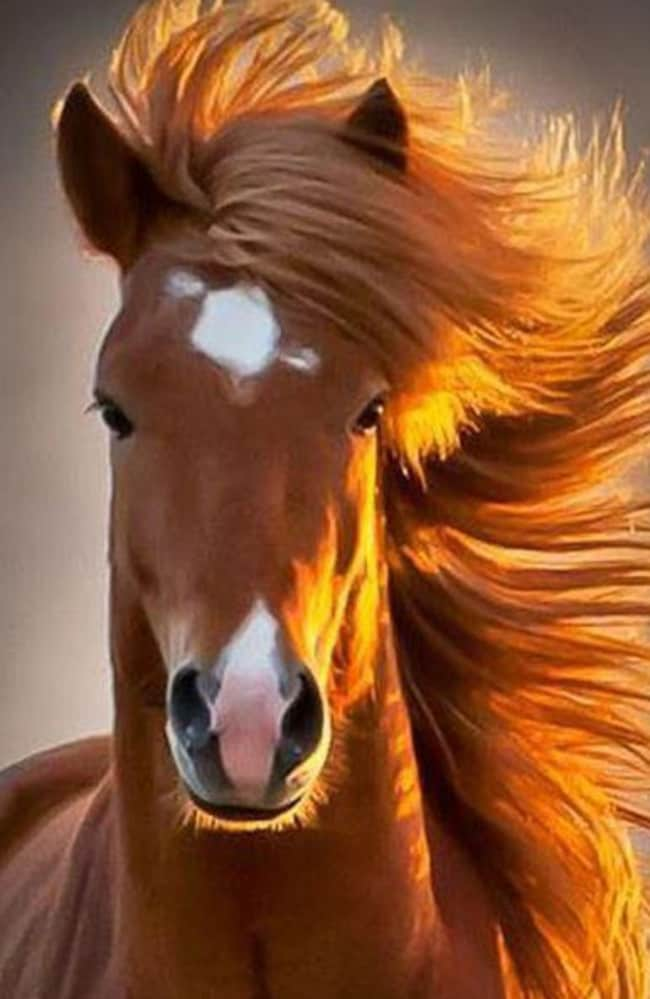 Could you seriously compete with this gorgeous horse's glossy locks? Picture: Reddit