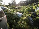 Car bumpers begin to become covered with weeds Fukushima, Japan. Picture: Arkadiusz Podniesinski/REX Shutterstock /australscope