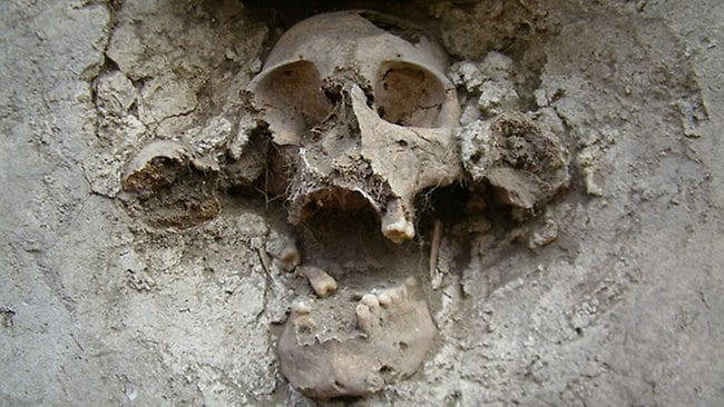 One of the skulls set among femur bones in the walls of the Temple of the Skulls, under excavation in the Tehuacan, Puebla, archaeological site of Mexico. Picture: Instituto Nacional de Antropologa e Historia
