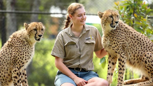 Australia S Latest Arrivals Are A Bunch Of Cheetahs