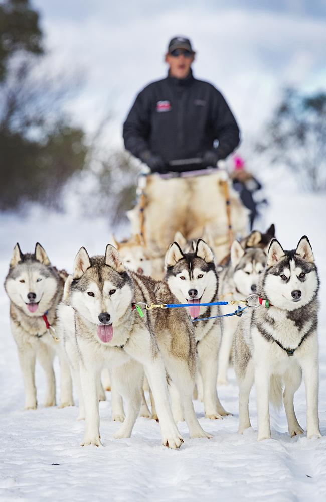 Brett Hadden with his huskies. Picture: Nathan Dyer