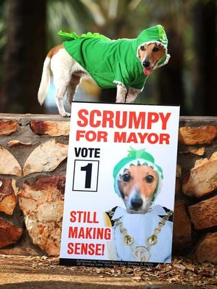 Princess Scrumpy puts her paw up to run for Lord Mayor in the recent council elections. Picture: Justin Kennedy