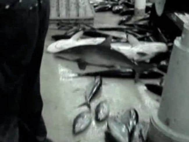 What a waste: The animals which are discarded and then thrown out to sea. Picture: Screengrab/Greenpeace