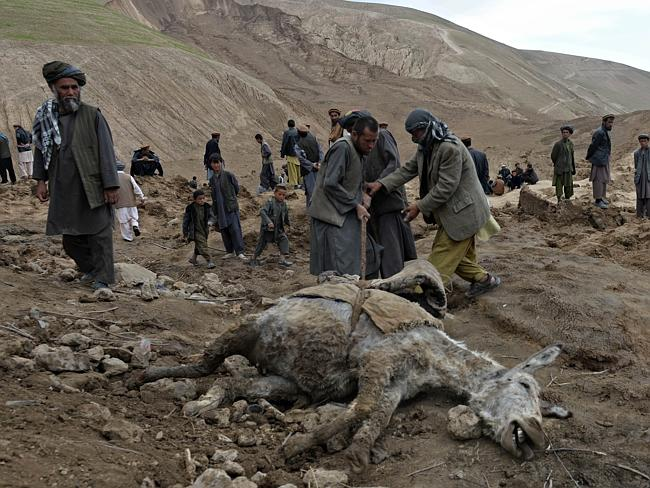 Search...Afghan rescuers pull the carcass of a donkey as they search desperately for survivors trapped under the mud. Picture: AFP