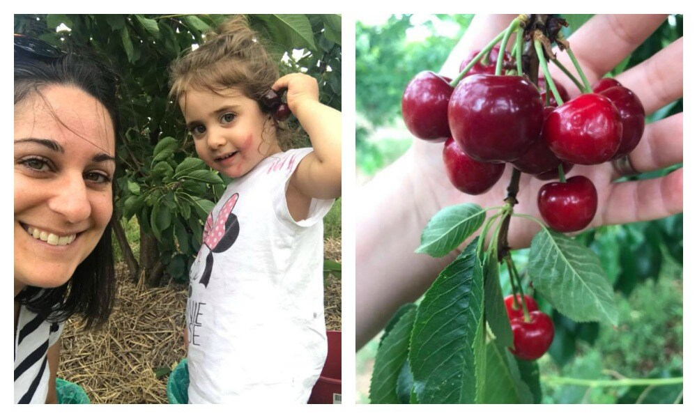 Why cherry picking is the perfect activity for the kids this festive season