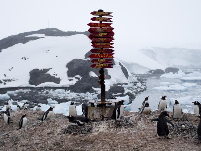 InGentoo penguins gather near a post.