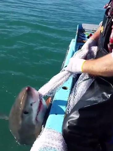 Aussie fisherman wrestles fishing net off shark