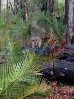 PARKS FOR PEOPLE: Wildlife in Dwellingup National Park. Picture: Maureen Spark
