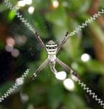 <p>Reader John Russell snapped this spider in his backyard at Gymea, NSW.</p>