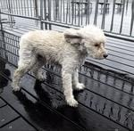 "<p>Take a look through the shocking pictures on social media as the Hurricane Sandy takes hold.</p>  <span>One user snapped this pic of a pooch in need of a raincoat. Picture: Twitter via Instagram <a href=""http://instagram.com/p/RYOojlkFZy"">http://instagram.com/p/RYOojlkFZy</a>/</span>"