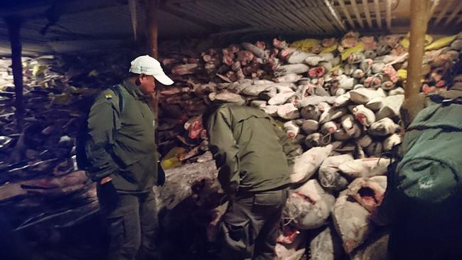 Galapagos National Park rangers inspect the illegal cargo.