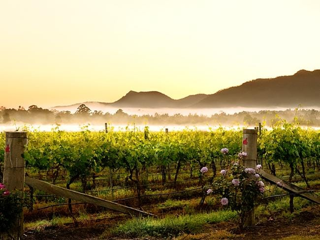 The beauty of the vines.