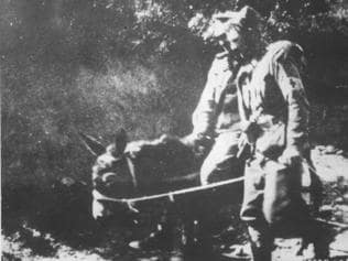 Humble heroes ... This picture, from World War I, shows John Simpson who — with his donkey- carried wounded soldiers to safety at Gallipoli.