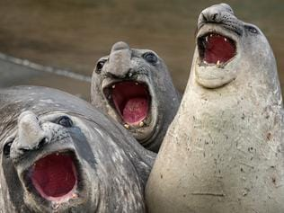 Comedy Wildlife Photography Awards Unveil The Hottest Entries So Far