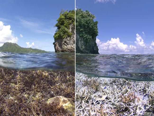 A before and after image of the bleaching in American Samoa. The first image was taken in December 2014. The second image was taken in February 2015. Picture: Supplied.