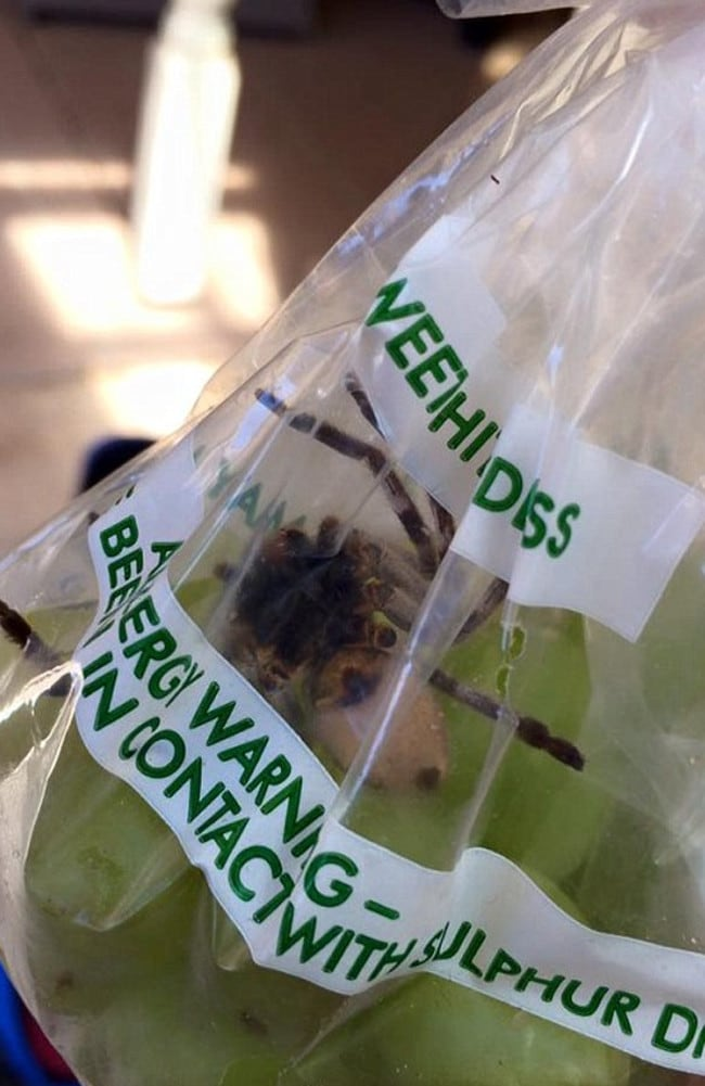 Rachael Buckley's green grapes came with an unwelcome intruder. Picture: Facebook