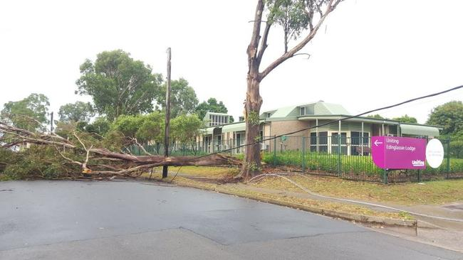 Strong winds caused a tree to collapse over powerlines in Penrith / Picture: TWITTER @9NewsSyd