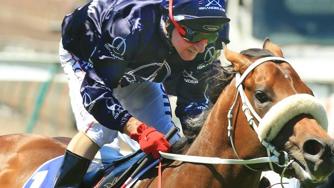 Zoustar was expected to represent Australia in the King's Stand Stakes before straining a suspensory ligament while working in England, which brought about his retirement. Picture: Mark Evans