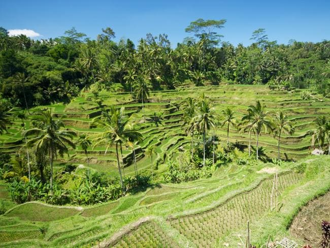 The dramatic wavelike tiers of the Tegallalang rice terraces north of Ubud. Picture: McKay Savage