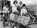 Niall Whyntie, Mandy Clark, Alison Hodge and Bill Whyntie move hay at the 1964 Royal Adelaide Show. That's an awesome hat, Bill.