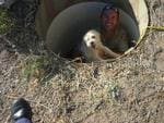 The RSPCA rescues puppies from an underground bunker on a Wheatbelt property