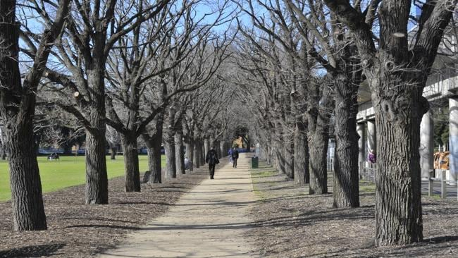 SOUTH Yarra is expected to be one of Melbourne's stronger performers.