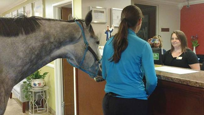Image result for Woman checks horse into Kentucky hotel in ultimate test