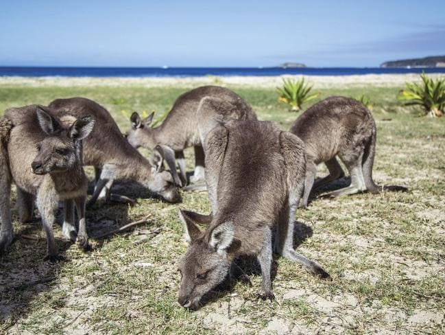 Locals at Pebbly Beach. Picture: Tourism Australia/Andrew Smith