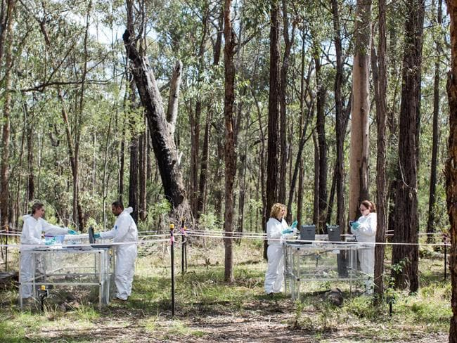 Researchers prepare for work at the Sydney body farm.