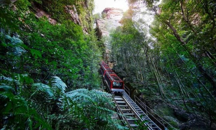 Elevate your kids' minds with Sculpture at Scenic World