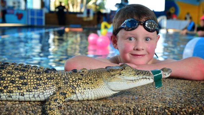 Crikey The Crocodile Stops By Portarlington Swimming Pool Opening Geelongadvertiser