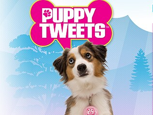 Puppy Tweets. Picture: Supplied